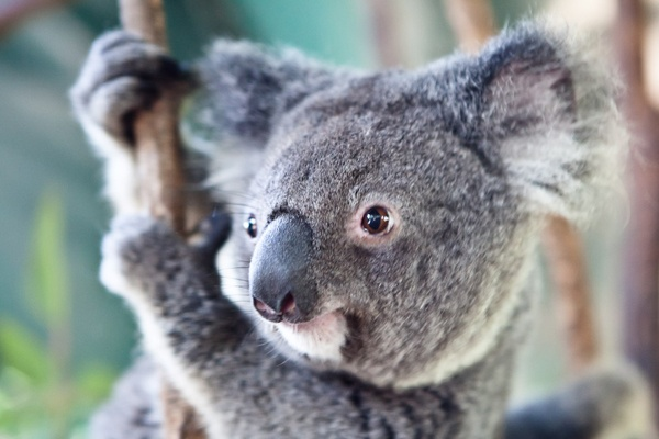 tours from sydney koalas blue mountains seo social media companies australia