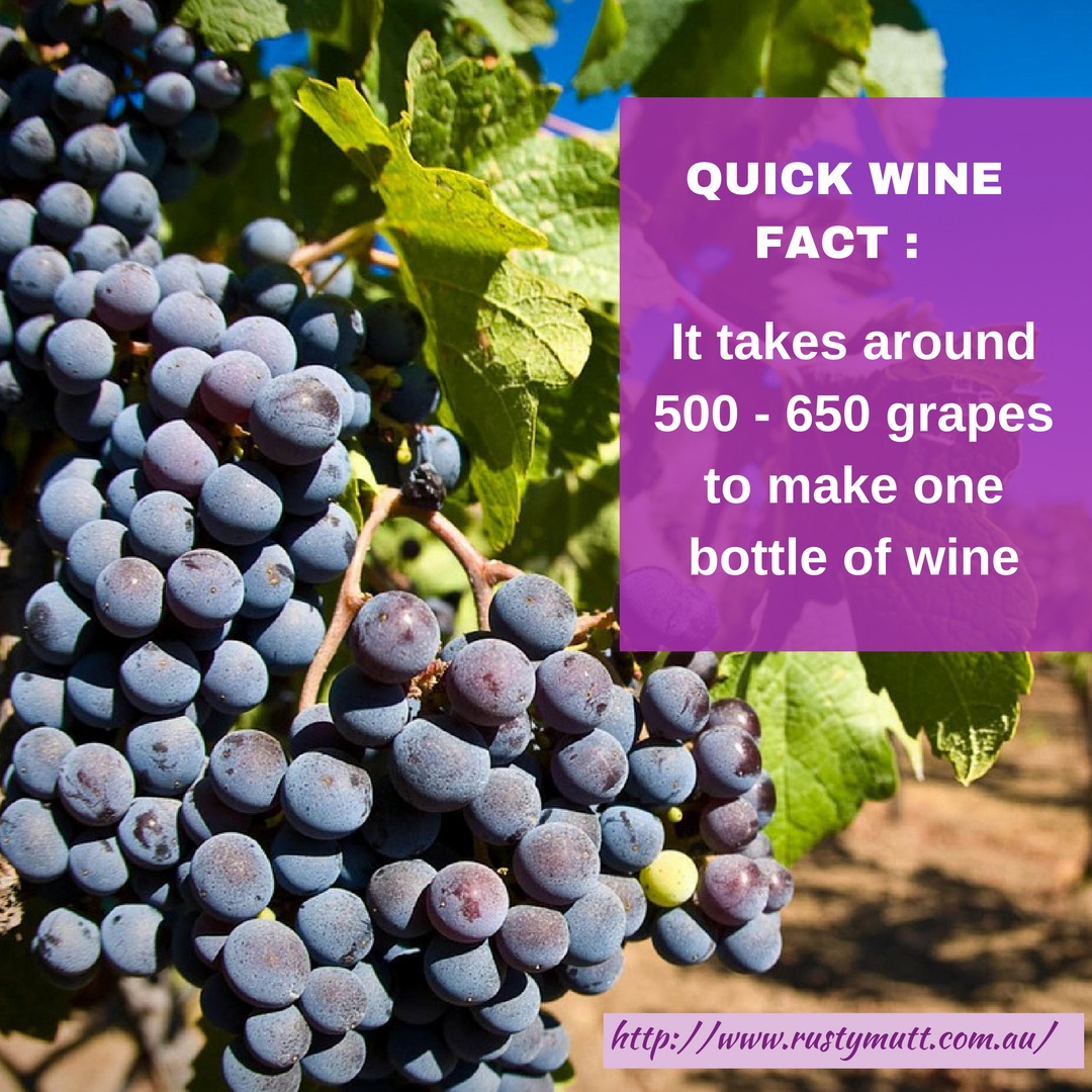 quick-fact-wine-memes